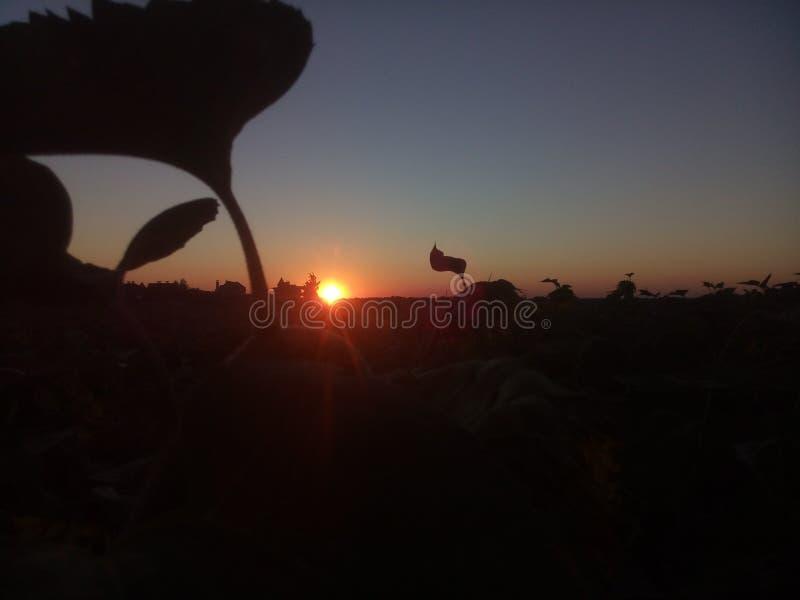 日落,日落是雄伟的 免版税库存照片