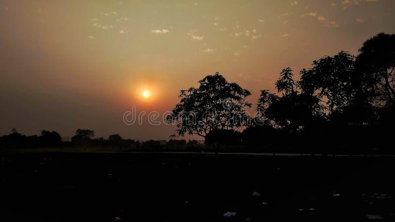 日落,现出轮廓,树 免版税库存图片