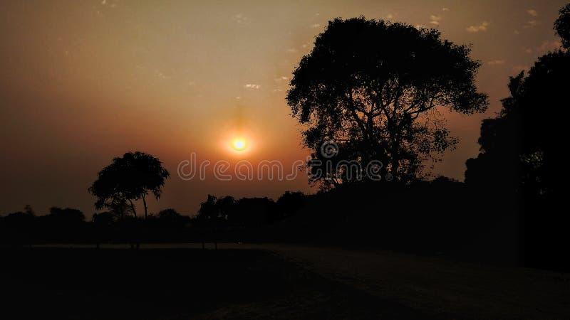 日落,现出轮廓,树 库存图片