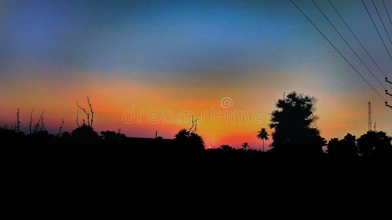 日落,现出轮廓,treed 库存照片