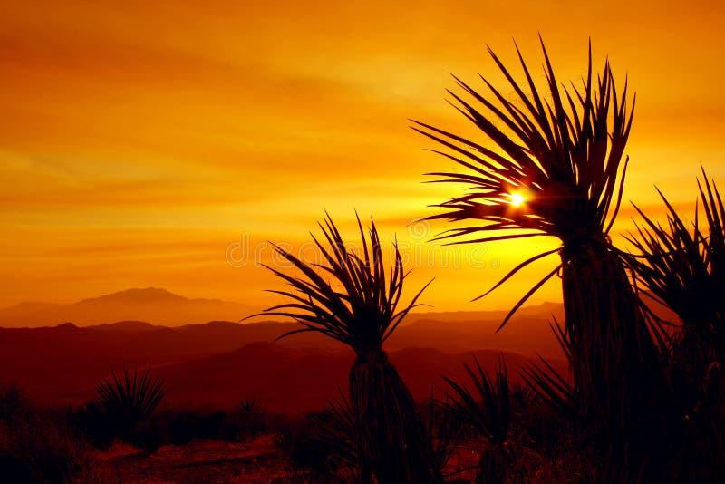 日落,约书亚树国家公园,美国 图库摄影