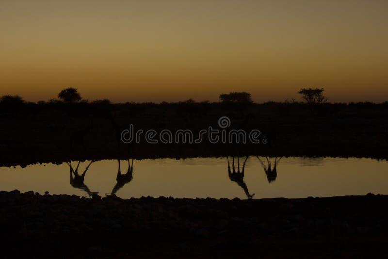 日落,纳米比亚 免版税图库摄影