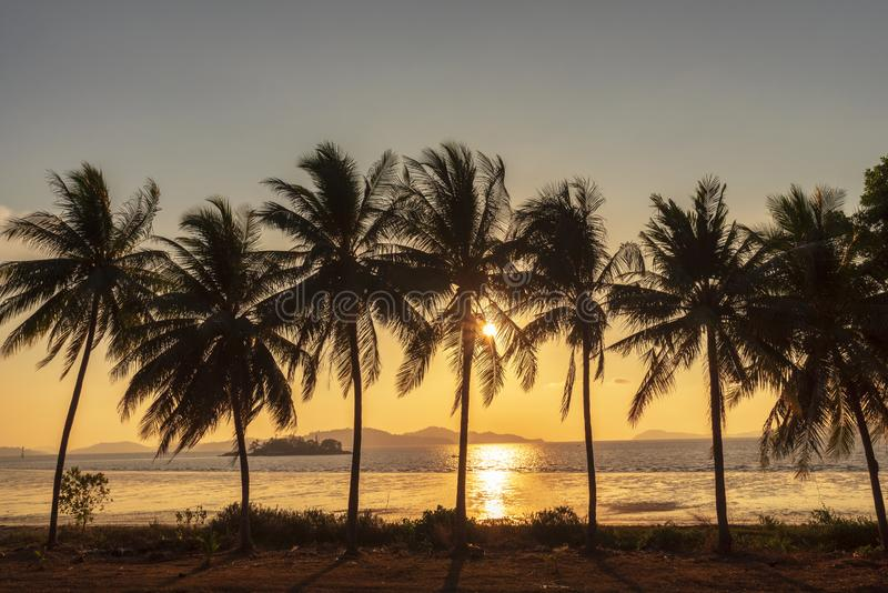 日落,美丽的反对背景的剪影甜可可椰子林场在热带海岛泰国 在树的新鲜的椰子 库存照片