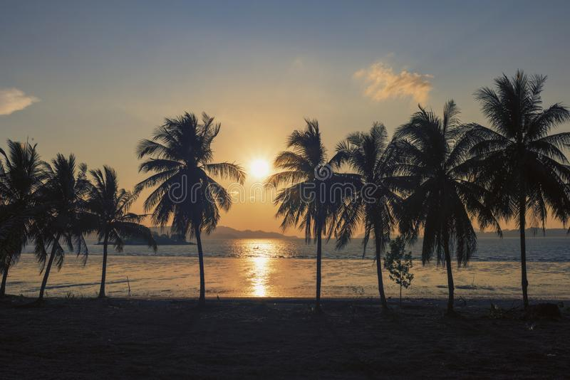 日落,美丽的反对背景的剪影甜可可椰子林场在热带海岛泰国 在树的新鲜的椰子 库存图片