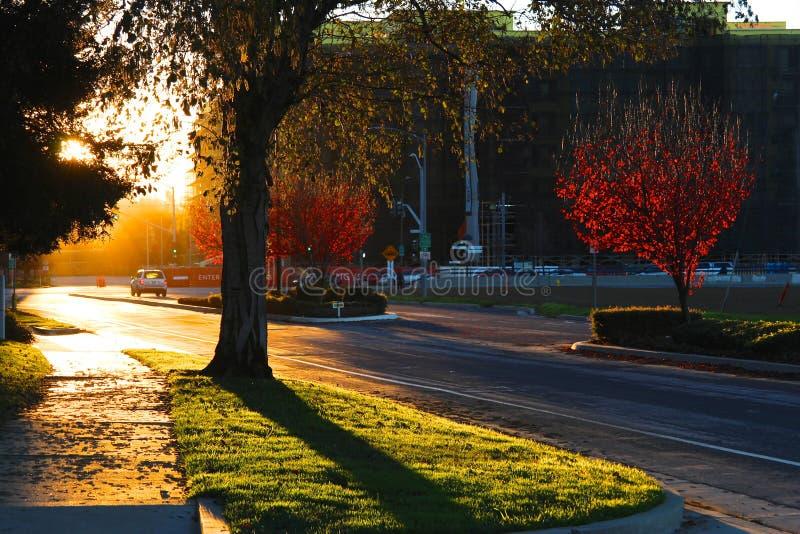 日落,路,树,汽车 免版税图库摄影