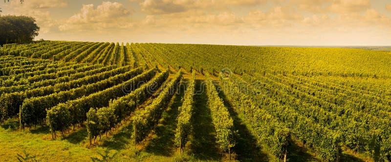 日落,风景,红葡萄酒Wineyard,法国 库存照片