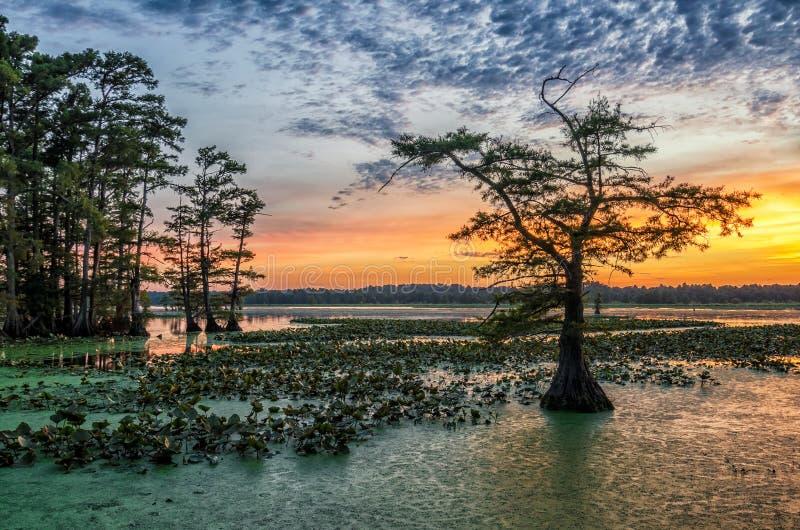 日落, Reelfoot湖在田纳西 免版税库存照片