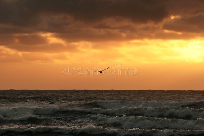 Download 日落 库存图片. 图片 包括有 海鸥, 浩大, 幽静, 巨大, 日落, 海洋, 夜间, 双翼飞机, 海运, 空虚 - 59507