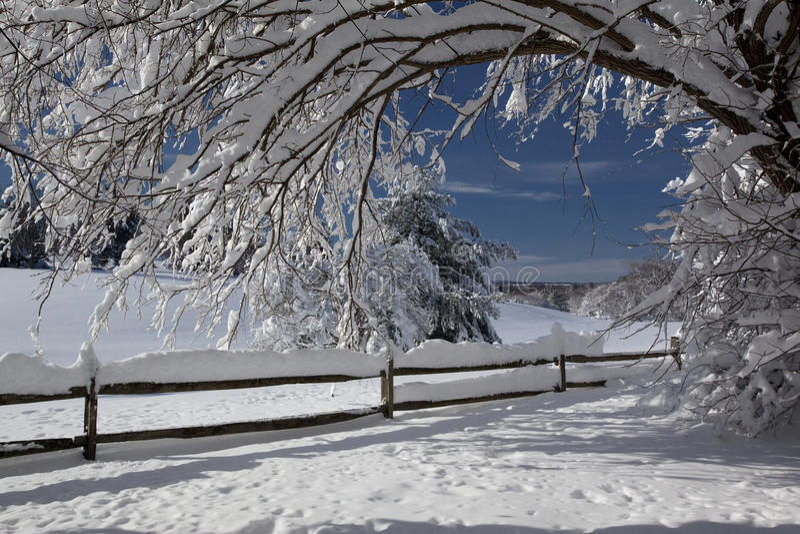 日雪 免版税库存照片