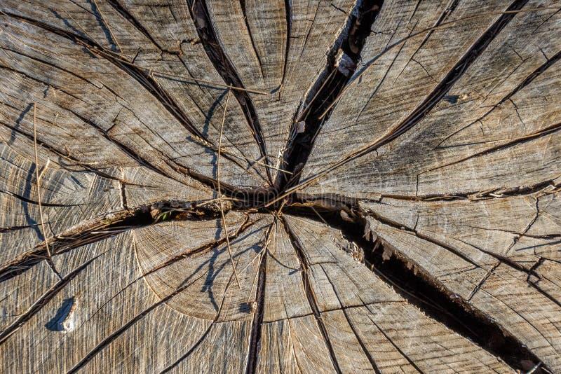 旧木桩裂缝 免版税图库摄影