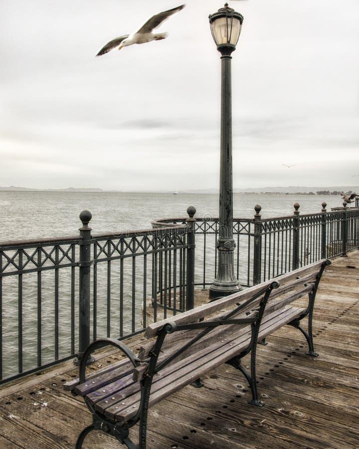 旧金山在码头7的海鸥 免版税库存图片