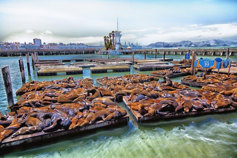 旧金山码头39 免版税图库摄影