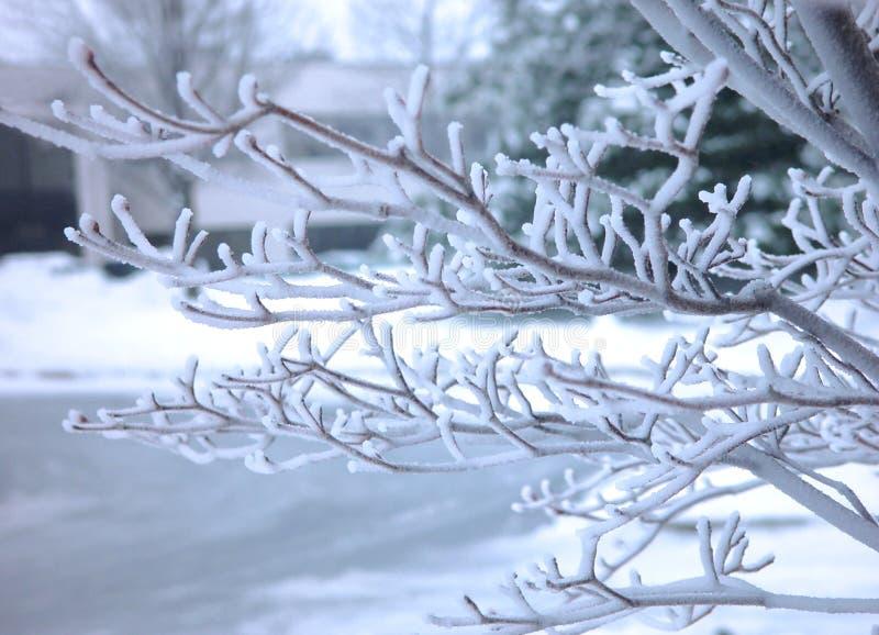 早午餐结霜的结构树 免版税图库摄影