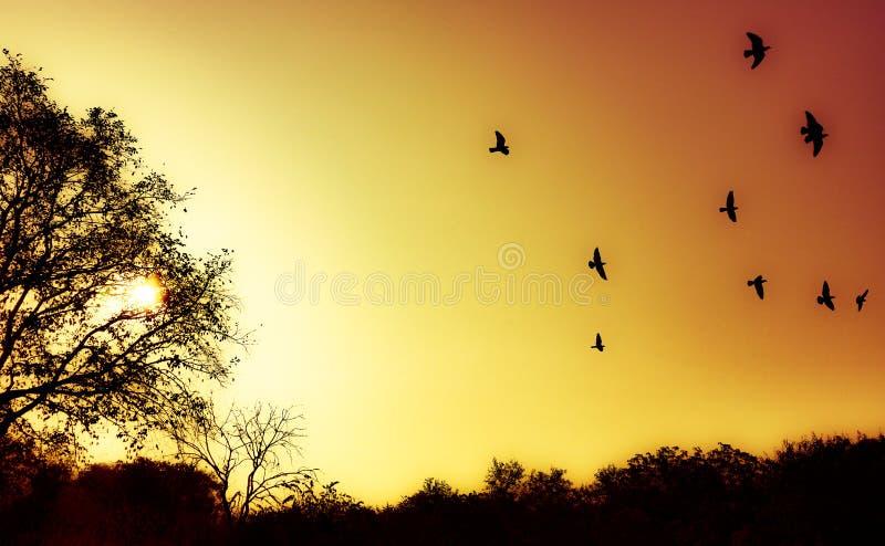 早日出美丽的景色在秋天森林里在印度 库存照片