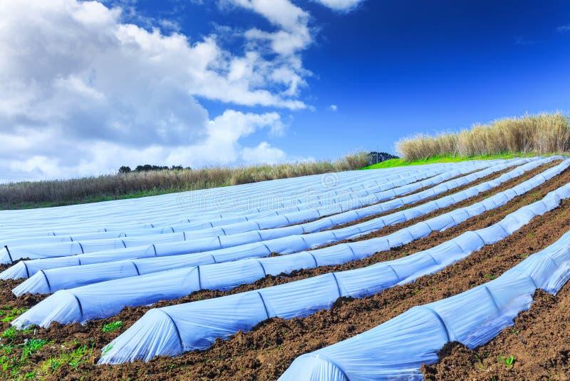 早春天耕种典型的农业技术  图库摄影