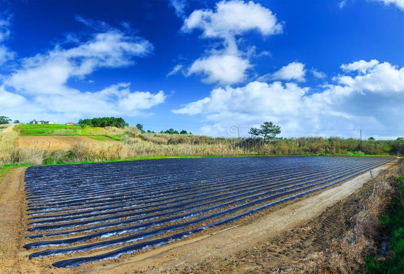 早春天耕种典型的农业技术  库存图片