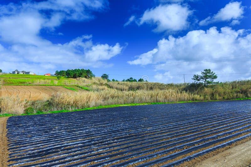 早春天耕种典型的农业技术  免版税库存图片