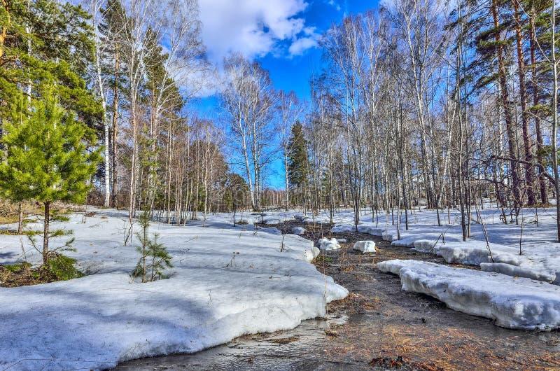 早春天风景在有熔化的雪和溪的森林里 免版税库存图片