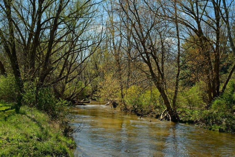 早春溪流 库存图片