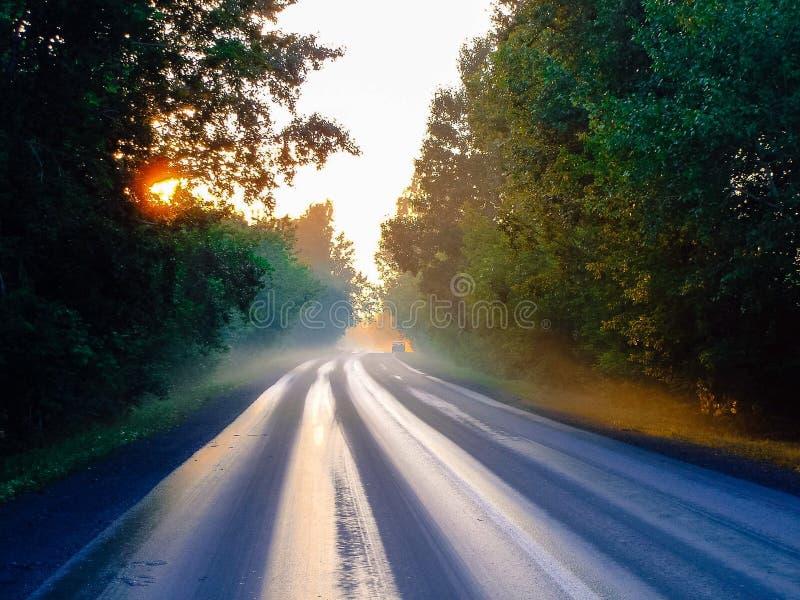 早晨下来森林公路 免版税库存图片