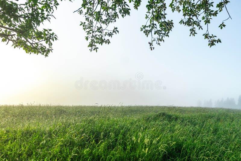 早晨与树枝的领域风景在与太阳和森林的黎明雾的 r 库存照片