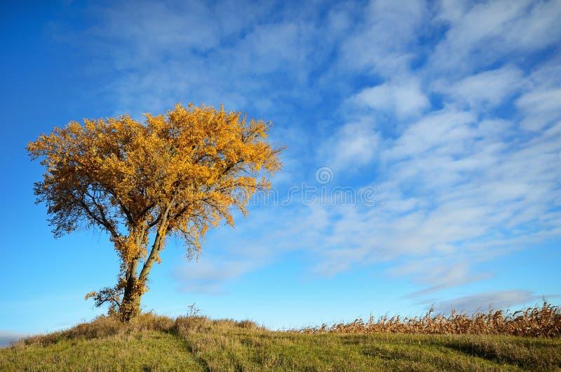 早晨发光在秋天的一棵树的太阳 库存图片