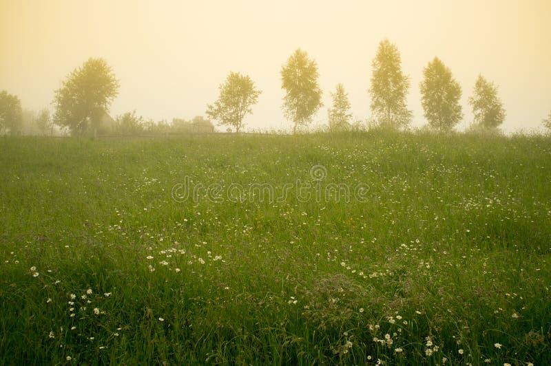 早晨在乡下 草甸和树在雾 库存照片