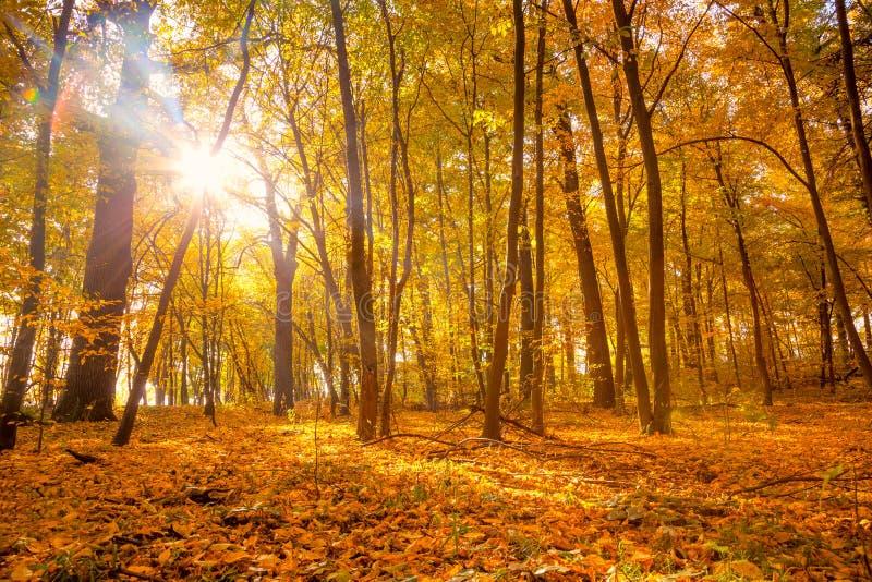 早晨在有阳光和光束的沈默秋天公园- 免版税库存照片