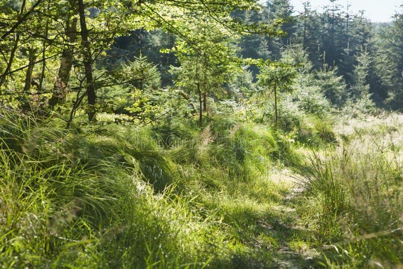 早晨在森林里在奥地利 免版税库存照片