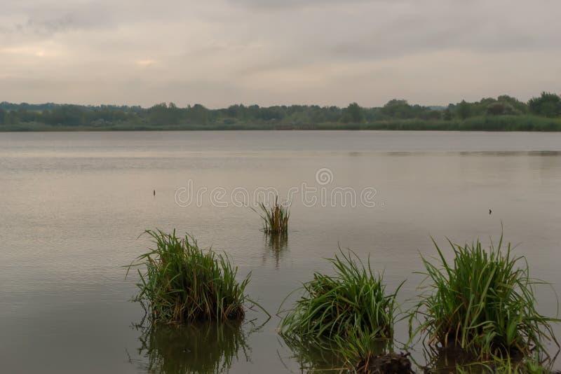 早晨在湖的国家风景有生长藤茎的 图库摄影