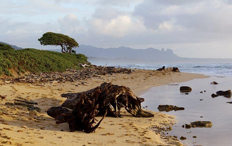 早晨在考艾岛 免版税库存照片
