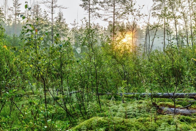 早晨太阳的光芒 免版税库存照片