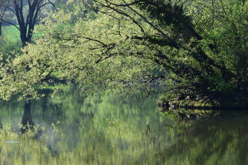 早晨太阳的洪泛区森林 库存照片