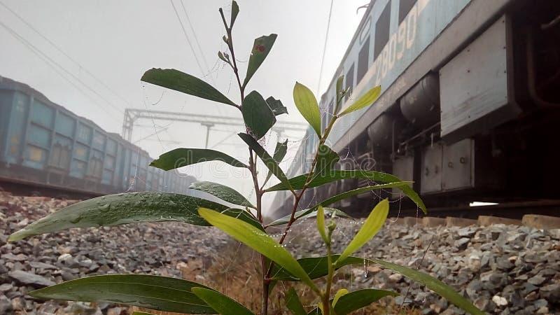 早晨好一点植物 图库摄影