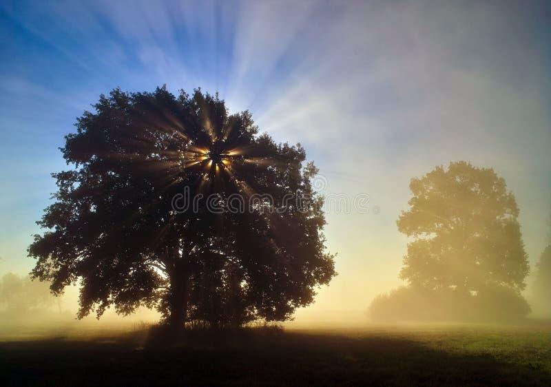 早晨心情在雾的洪泛区森林里 库存图片