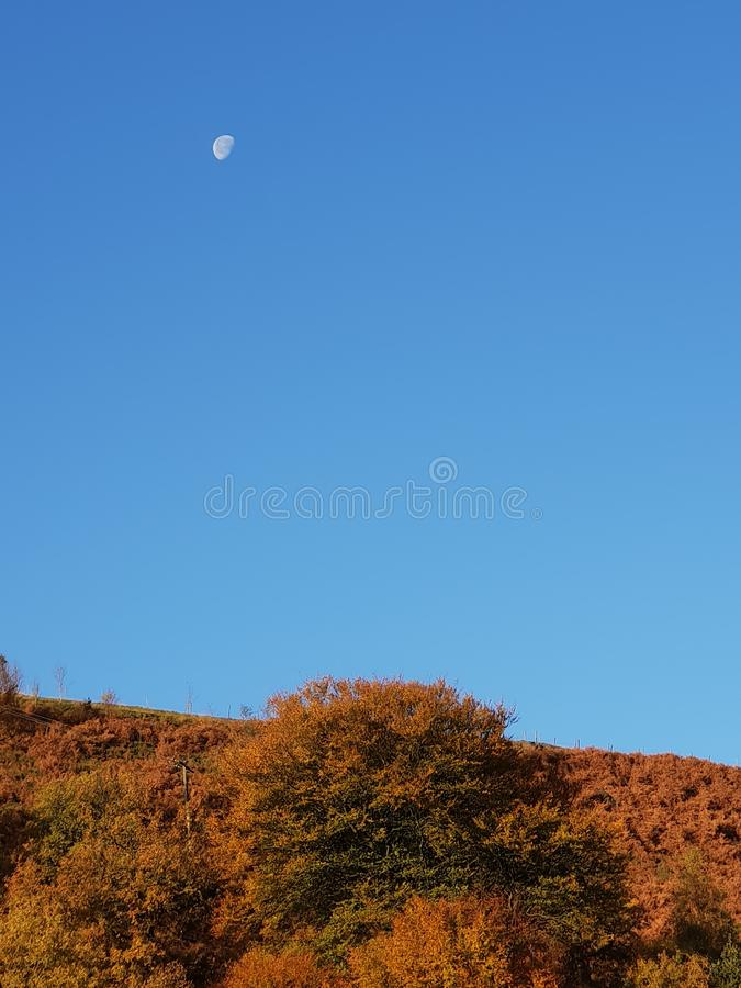 早晨月亮 免版税图库摄影