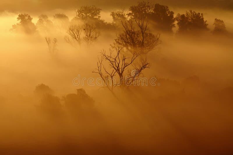 早晨有薄雾的农业风景 库存照片