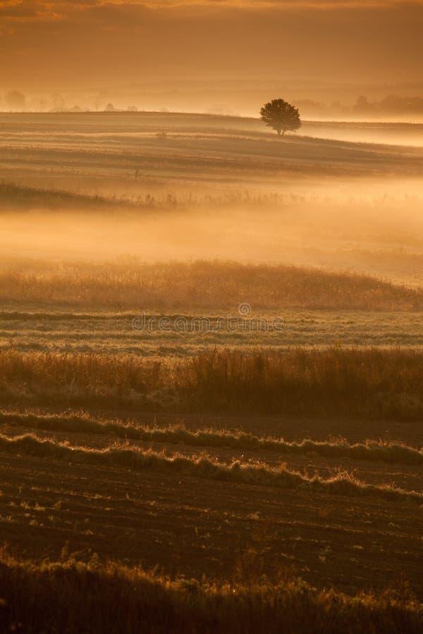 早晨有薄雾的农业风景 免版税库存照片