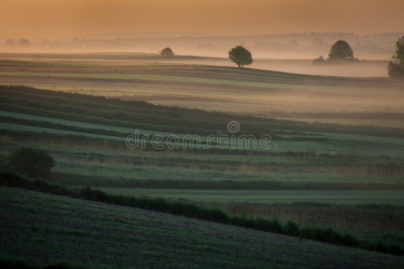 早晨有薄雾的风景在河谷 库存图片