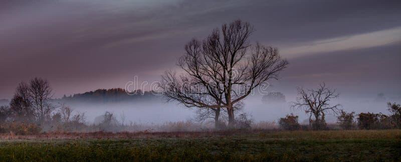 早晨有薄雾的风景在河谷 免版税库存图片