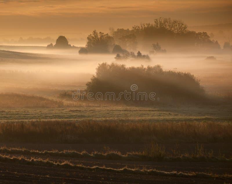 早晨有薄雾的风景在河谷 免版税库存照片