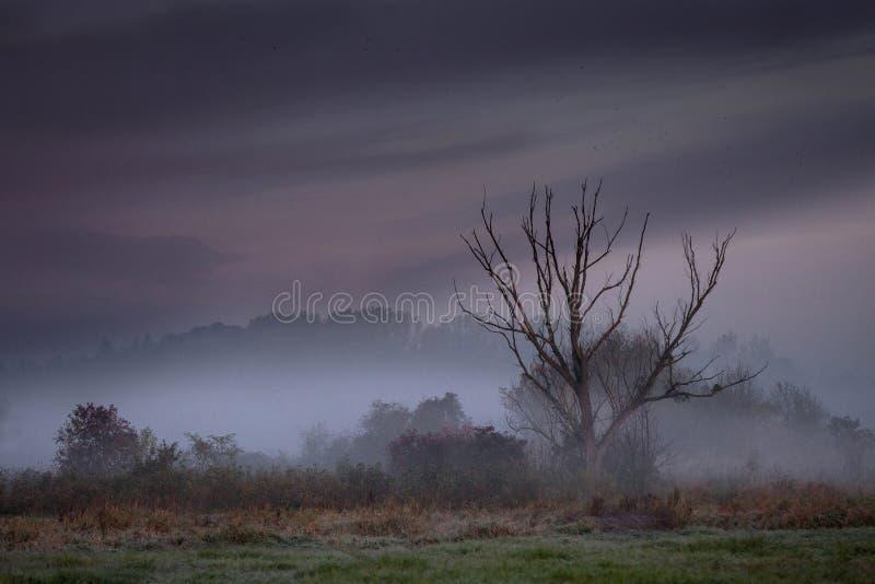 早晨有薄雾的风景 免版税库存照片