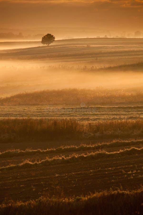 早晨有薄雾的风景 图库摄影