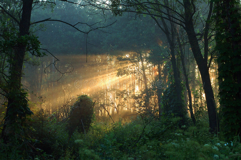 早晨木头 库存照片