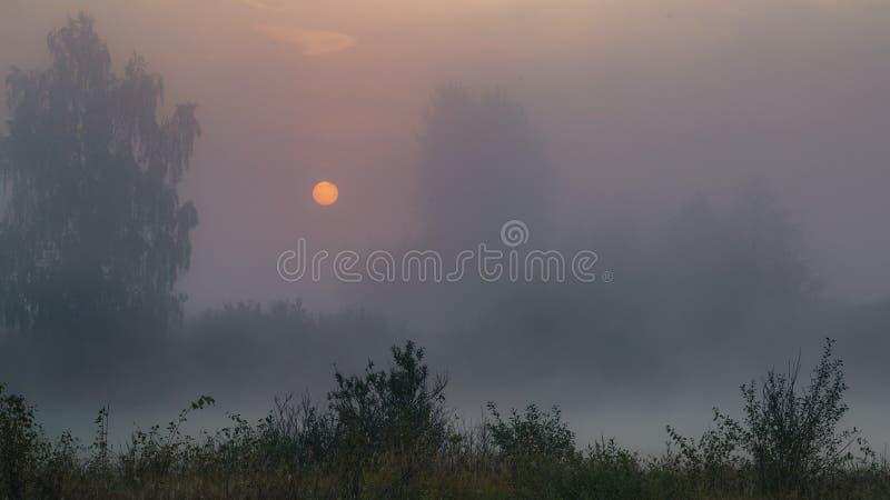 早晨来了 橙色太阳盘在有薄雾的湖、黑暗的树和灌木上上升 免版税图库摄影