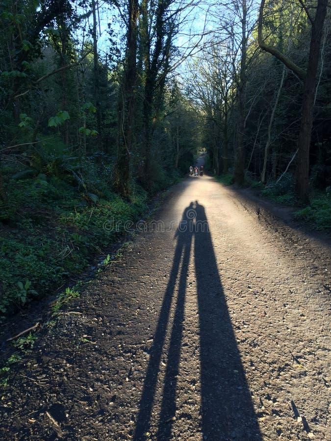 早晨步行在森林里 免版税库存照片