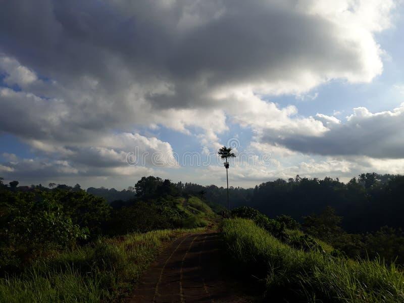 早晨步行在Ubud巴厘岛 库存图片