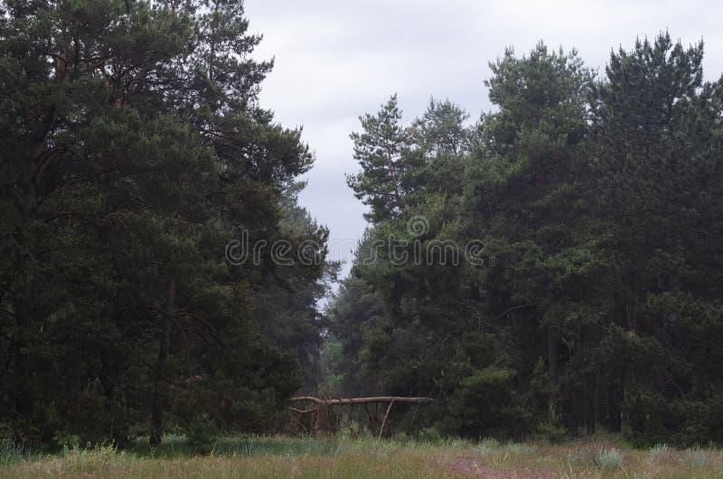 早晨步行通过春天森林这是一讨厌的天 ?? 库存图片
