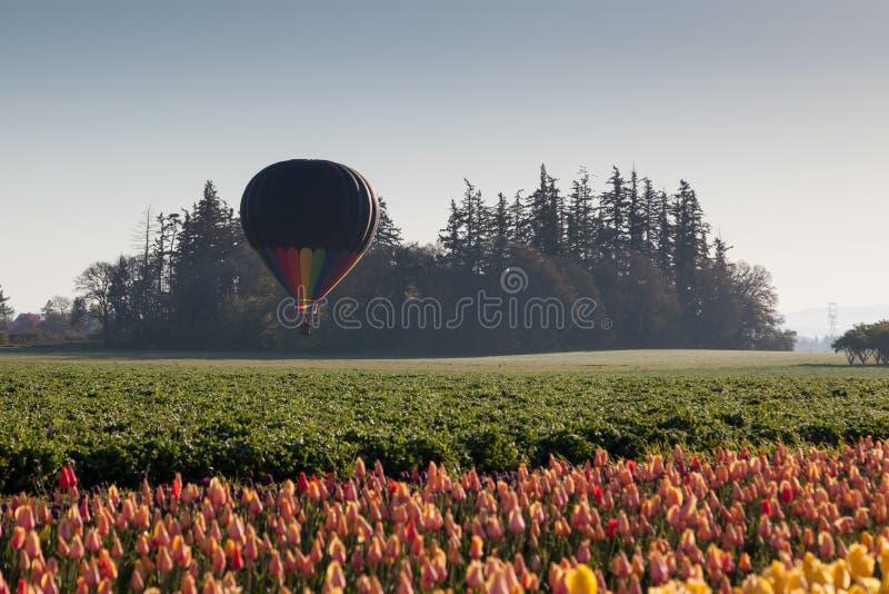 早晨气球飞行 免版税库存图片