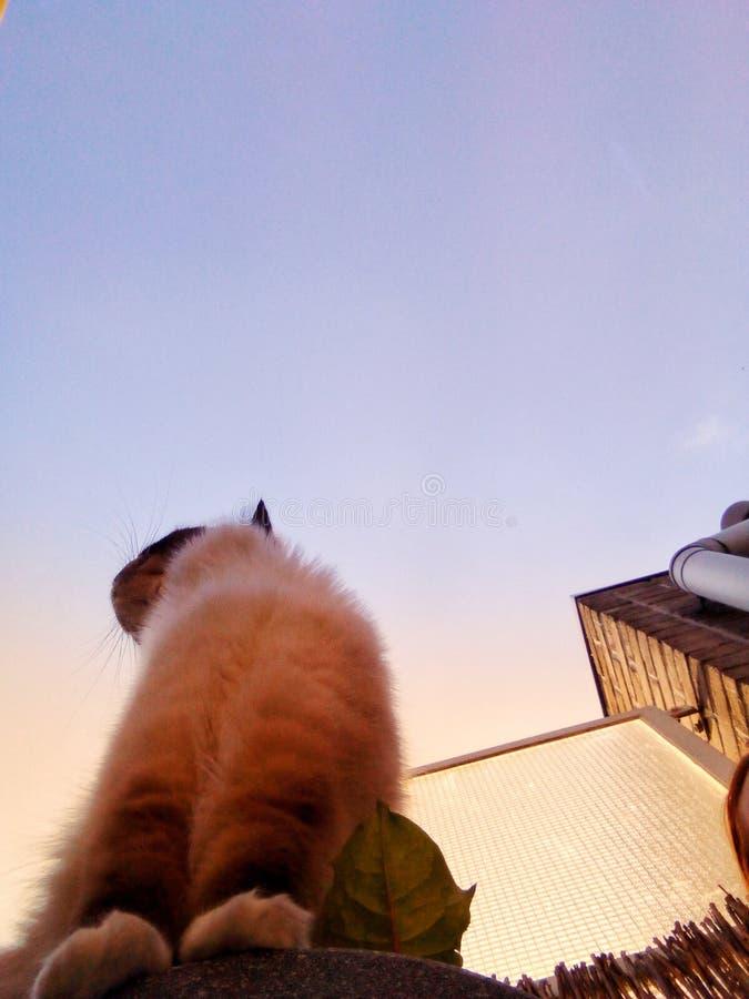 早晨猫 免版税库存图片